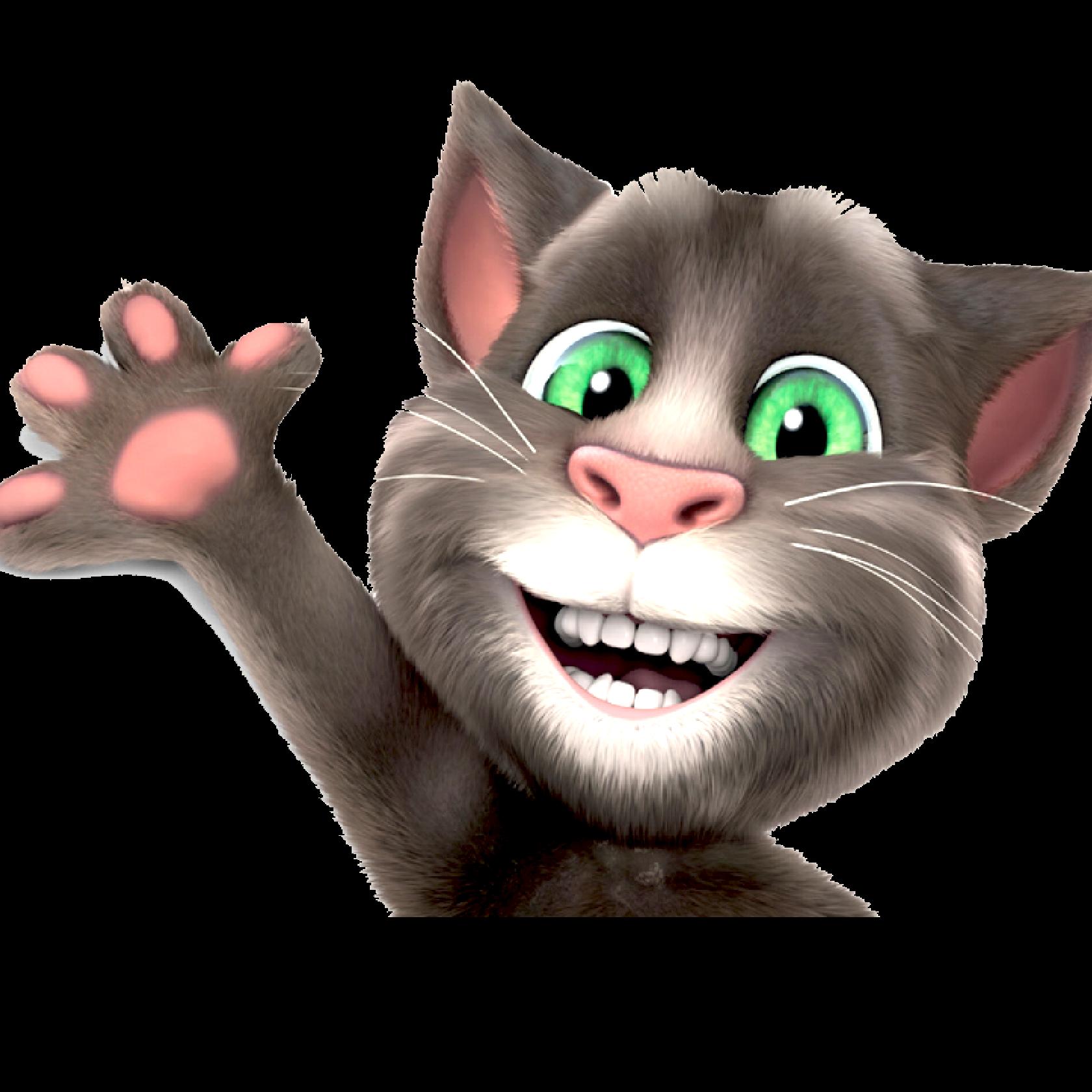 Toms Cat News